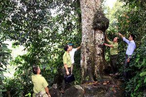 Tuyên Quang: Nhiều giải pháp quản lý bảo vệ và phát triển rừng