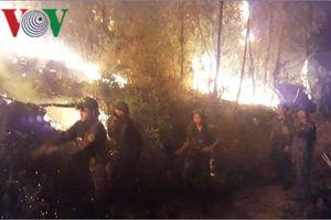 Cả ngàn người trắng đêm cứu rừng thông bốc cháy ngùn ngụt