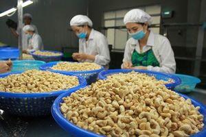 Tăng trưởng xuất khẩu sụt giảm mạnh, vì sao?