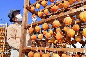 40 ngày kỳ công làm hồng treo gió, đặc sản mùa thu trứ danh Nhật Bản
