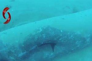 5 đường ống dẫn dầu dưới biển của Syria bị phá hoại nghiêm trọng