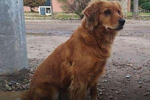 Chú chó trung thành đứng đợi chủ cả năm trời ngoài đồn cảnh sát