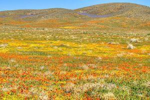 Hãy cùng tận hưởng những cánh đồng hoa đẹp như trong truyện cổ tích trên thế giới