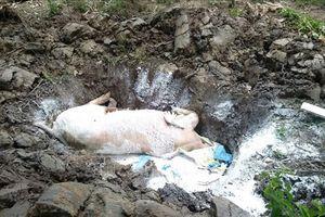 Dịch tả lợn châu Phi xuất hiện tại trang trại 20.000 con ở Đồng Nai
