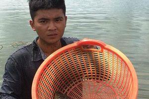 Khánh Hòa: Kiếm tiền tỷ nhờ cho nuôi cá mú chung nhà với ốc hương