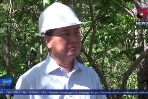 Ninh Thuận kiểm soát chặt dịch tả lợn châu Phi