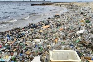 G20 thống nhất giảm rác thải nhựa