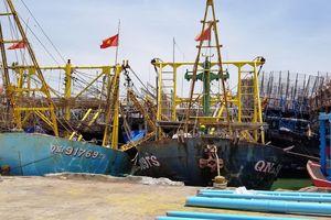 Quảng Nam: Hàng trăm tấn mực 'nằm chờ' vì không có DN thu mua(?!)