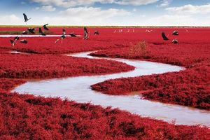 Cảnh quan huyền ảo tại khu đầm lầy đỏ rực nổi tiếng Trung Quốc