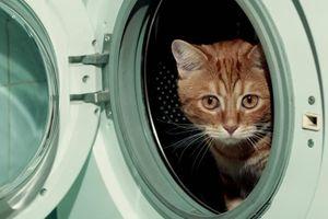 Rơi vào máy giặt, chú mèo bị quay 35 phút đến tơi tả