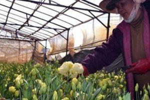 10 năm phát triển giống cây - con mới, vẫn nhập 80% giống hoa, rau