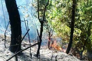 Cháy rừng thông ở Nghệ An
