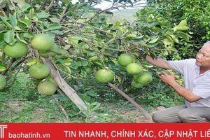 Làm vườn đa canh, lão nông 'đút túi' hơn 250 triệu đồng mỗi năm