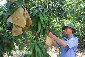 Đồng Nai: Giám đốc chân đất phủ xanh đồi hoang bằng trái cây đặc sản