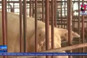 Phạt 200 triệu đồng nếu mang thịt lợn vào Hàn Quốc