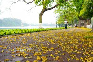 Hà Nội đẹp mơ màng mùa sấu rụng