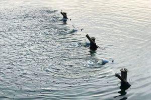 5 tấn cá chết nổi trắng hồ, Đà Nẵng khẩn cấp lắp hệ thống sục khí