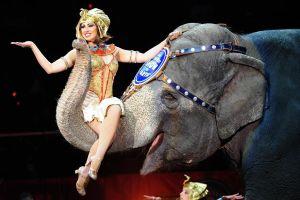 Bi kịch của 'ông tổ' voi trong ngành công nghiệp xiếc thú