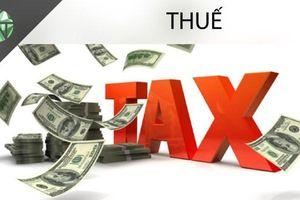 Nộp hồ sơ khai thuế giá trị gia tăng cho chi nhánh ở đâu?