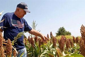 Bộ trưởng Nông nghiệp Mỹ nói sự thật đau vì thương chiến