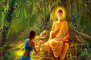 Phật dạy: Muốn hạnh phúc hãy làm điều này mỗi ngày