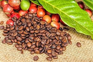 Giá cà phê tăng mạnh, chạm mốc 34.000 đồng