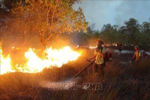 Bình Định: Cháy lớn thiêu rụi hơn 2 hecta cây bụi ở khu du lịch Kỳ Co
