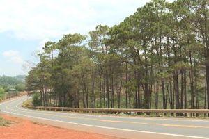 Đắk Nông: Chưa xử lý dứt điểm tình trạng phá thông dọc Quốc lộ 14
