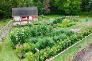 Vợ chồng trẻ cùng hai con 'say mê' công việc làm vườn, phủ xanh 2,75 hecta đất trống