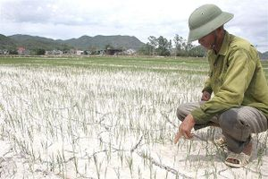 Nắng nóng gay gắt, gần 12.500 ha ở Ngệ An 'khát nước'