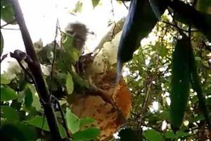 Người đàn ông chết thảm khi bị ong đốt lúc vào rừng lấy mật ong