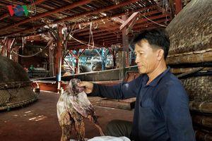 Ngư dân Quảng Nam gặp khó khăn trong tiêu thụ mực khô