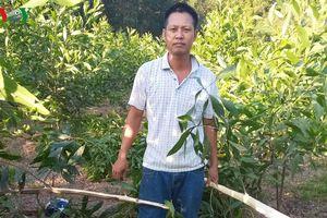 Lặng người nhìn vườn keo gần 4.000 gốc bị kẻ gian chặt sát gốc