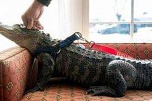 Nga: Cấm nuôi thú hoang tại gia