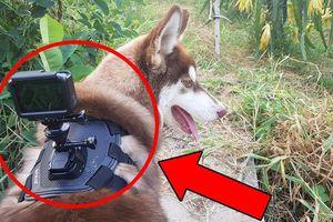 Gắn camera lên người 'boss' cưng để làm vlog YouTube: Trào lưu mới đang manh nha đổ bộ Việt Nam?