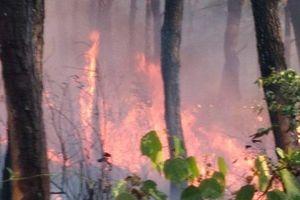 Huế: 4 vụ cháy rừng xảy ra trong một ngày, hàng chục hộ dân phải sơ tán