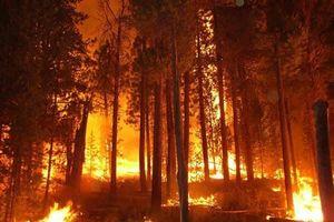 Thừa Thiên Huế: Liên tiếp 4 vụ cháy rừng trong 1 ngày, sơ tán khẩn cấp hàng chục hộ dân