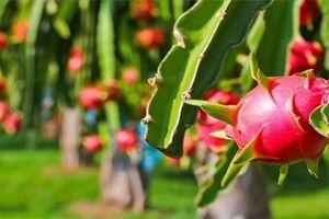 Xuất khẩu rau quả lần đầu đạt 2 tỷ USD trong nửa năm