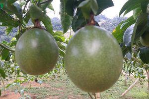 Xuất khẩu nông sản, thực phẩm của Sơn La đạt 78 triệu USD