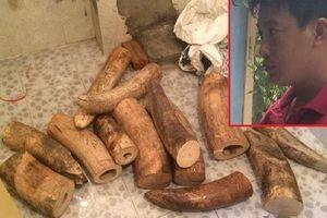 Hà Nội: Bắt giữ lượng ngà voi 'khủng'