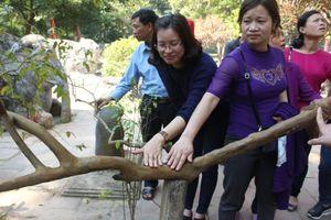 Chuyện giật mình loạt 'quái cây' trăm tuổi hội tụ ở điện Lam Kinh