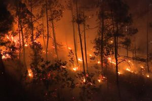 Hé lộ nguyên nhân hàng loạt vụ cháy rừng xảy ra cùng một ngày ở Huế