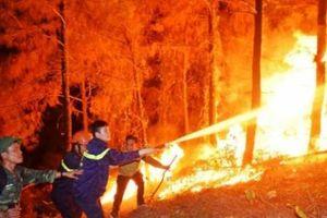Hà Tĩnh: Cấp bách tăng cường phòng, chống cháy rừng