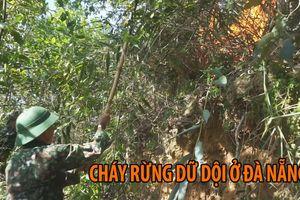 Hàng trăm người toát mồ dập đám cháy rừng dữ dội ở Đà Nẵng