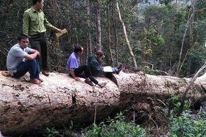 Đắk Nông; Bí thư tỉnh chỉ đạo xử lý vụ phát hiện thêm hàng chục m3 gỗ khai thác trái phép