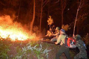Hà Tĩnh: Hơn 1000 người tham gia dập tắt đám cháy rừng trong đêm
