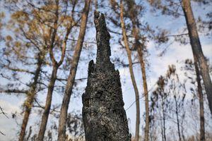 Tro tàn nơi rừng phòng hộ bị 'giặc lửa' hoành hành 3 ngày đêm