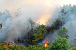 Cháy rừng thông tại Bố Trạch (Quảng Bình)