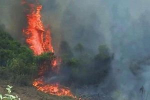 Thêm một vụ cháy rừng xảy ra tại Quảng Bình, gần 500 người gồng mình dập lửa
