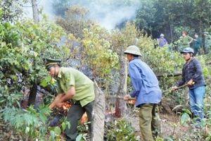 Sau Hà Tĩnh, 5 ha rừng ở Quảng Bình bị thiêu rụi hoàn toàn